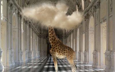 """Al Palazzo Ducale di Massa gli scatti """"surrealisti"""" di Bart Herreman"""