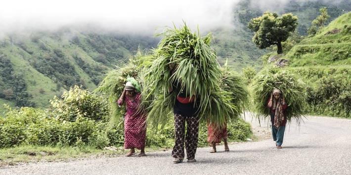 الفاو تسرع الجهود العالمية الرامية إلى انتشال سكان الريف من براثن الفقر المدقع